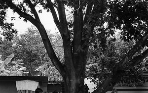 木の下の自転車