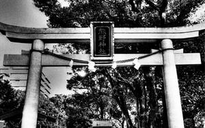 Torii Of Kumano Shrine