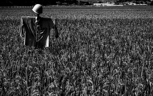 Scarecrow Wearing A Helmet In The Rice Field