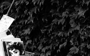 自転車の籠の中にオードリー・ヘプバーン