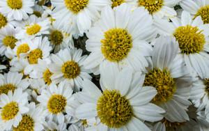 犇めく花々