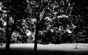 芝生にひとりで腰を下ろす若い男