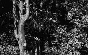 根津神社のベンチ