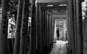 Woman Walking Through Shinto Gateways