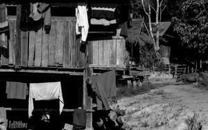 軒先に干された洗濯物とイノブタ