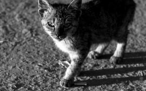 用心深い猫