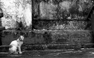 道端にお座りする猫