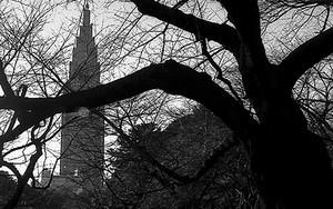 木々の向こうにタワーが見える