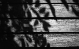 Shadow Of Leaves