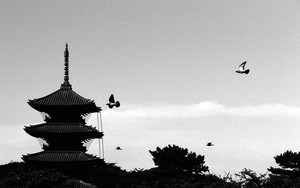 Five-storied Pagoda And Birds
