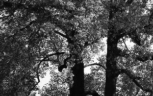 Around The Tree