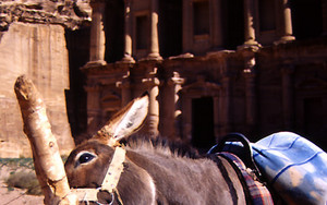 Donkey And Ad Deir