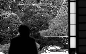 日本庭園を眺める男