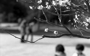 桜の向こうには子供