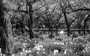 木々の中を歩く人影
