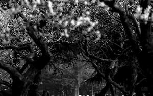 木の向こうに男の子