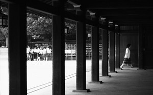 Wooden Pillars In Meiji Jingu