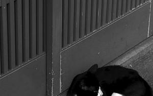 Cat In Front Of A Sliding Door