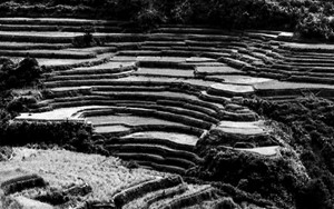 Rice Terrace On The Steep Slope