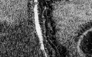 Path Between Rice Paddies