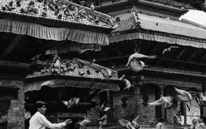 Doves In Durbar Square