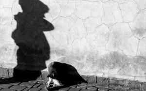 猫と男の子の影