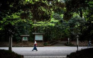 明治神宮の参道を歩く女性