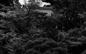 Pagoda In Ninna-Ji