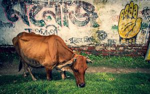 牛と手のひら