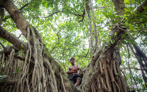 Boy On The Tree