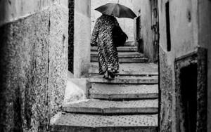 傘は路地を往く