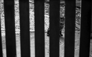 Cat On The Other Side Of The Fence