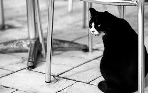 椅子の下の猫