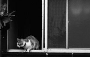 Cat Beside The Window