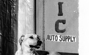Dog In Front Of A Shop