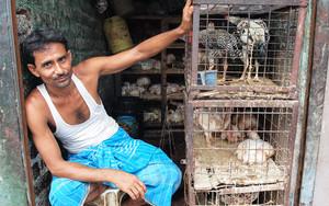 檻の中の鶏