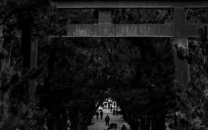 Torii At The Approach To Izumo Taisha