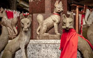 Many Foxes In Toyokawa-Inari