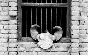 窓辺の頭蓋骨