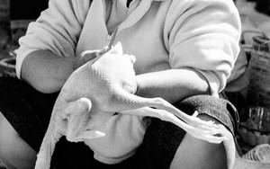 小太りの女性と鶏