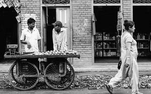 台車上のマンゴーと秤