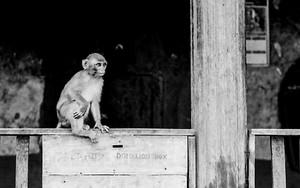 募金箱の上に猿