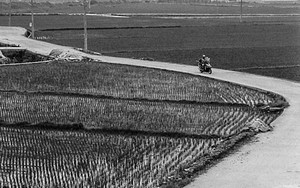 Direct Road In Rice Paddies