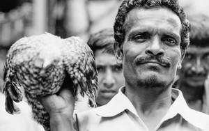 Man Holding A Falcon