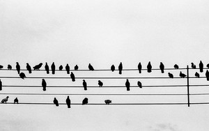 Pigeons On The Staff Notation
