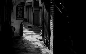 Rambling Black Cat