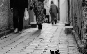 Ramping Cat In The Lane