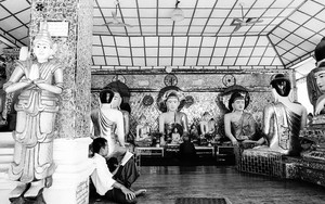 Reading Books Among Buddhist Statues