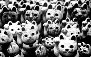Many White Emotionless Cats