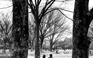 Couple Between Trees